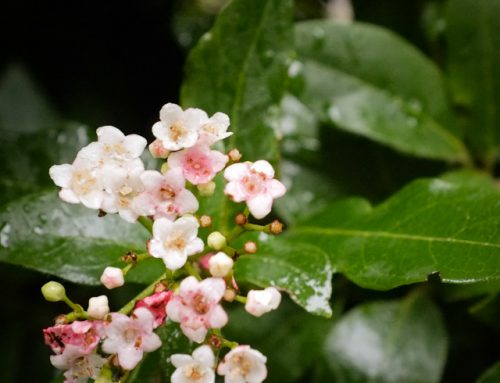 Two easy to grow plants to give you attractive flowers in late Autumn